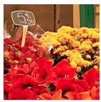 鲜花网上销售